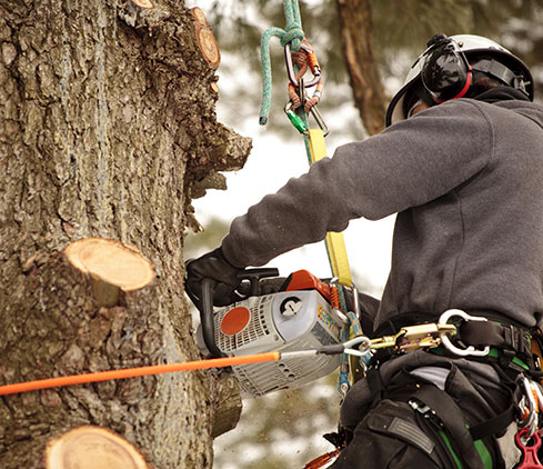 TreePro employee cutting a tree down